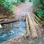 Log Bridge on the Daniel Ridge Trail