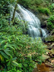 Pisgah National Forest: Shelton Laurel and Camp Creek Bald