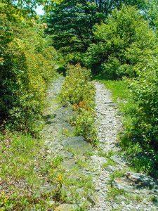 Flat Laurel Creek Stony Surface