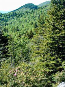Little Sam Trail View