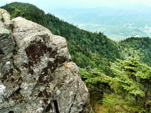 Pisgah National Forest: Roan Mountain