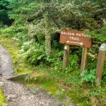 Balsam Nature Trail Start