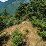 View from the Mount Mitchell Trail