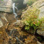 Lower Creek Cascade