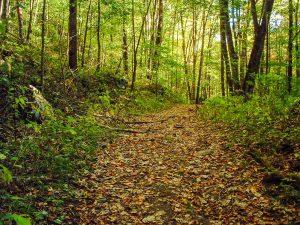 Main Trail in Pinnacle Park