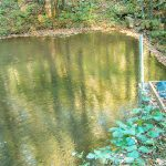 Pond in Pinnacle Park