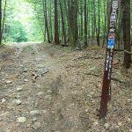 Lower Sidehill Trail Hemlocks