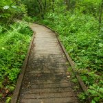 Deer Lake Lodge Trail Bridge