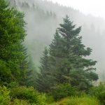 Commissary Trail in Fog