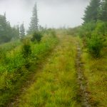 Commissary Trail in Fog