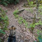Darla the Trail Dog on Lover's Leap Trail