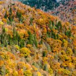 Devil's Courthouse and Fall Color