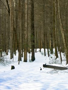 Hickory Branch Trail in Snow