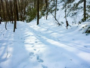 Shadows in the Snow on Hickory Branch Trail