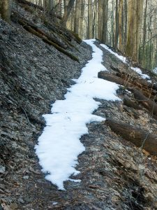 Snow on the Rufus Morgan trail