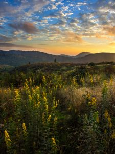 Pisgah National Forest: Black Balsam Area