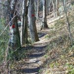Red Trail in Richmond Hill Park