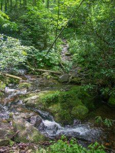 Buckeye Gap Trail Stream Crossing