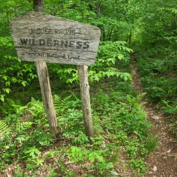 Our Comments on the Pisgah and Nantahala Wilderness Evaluations