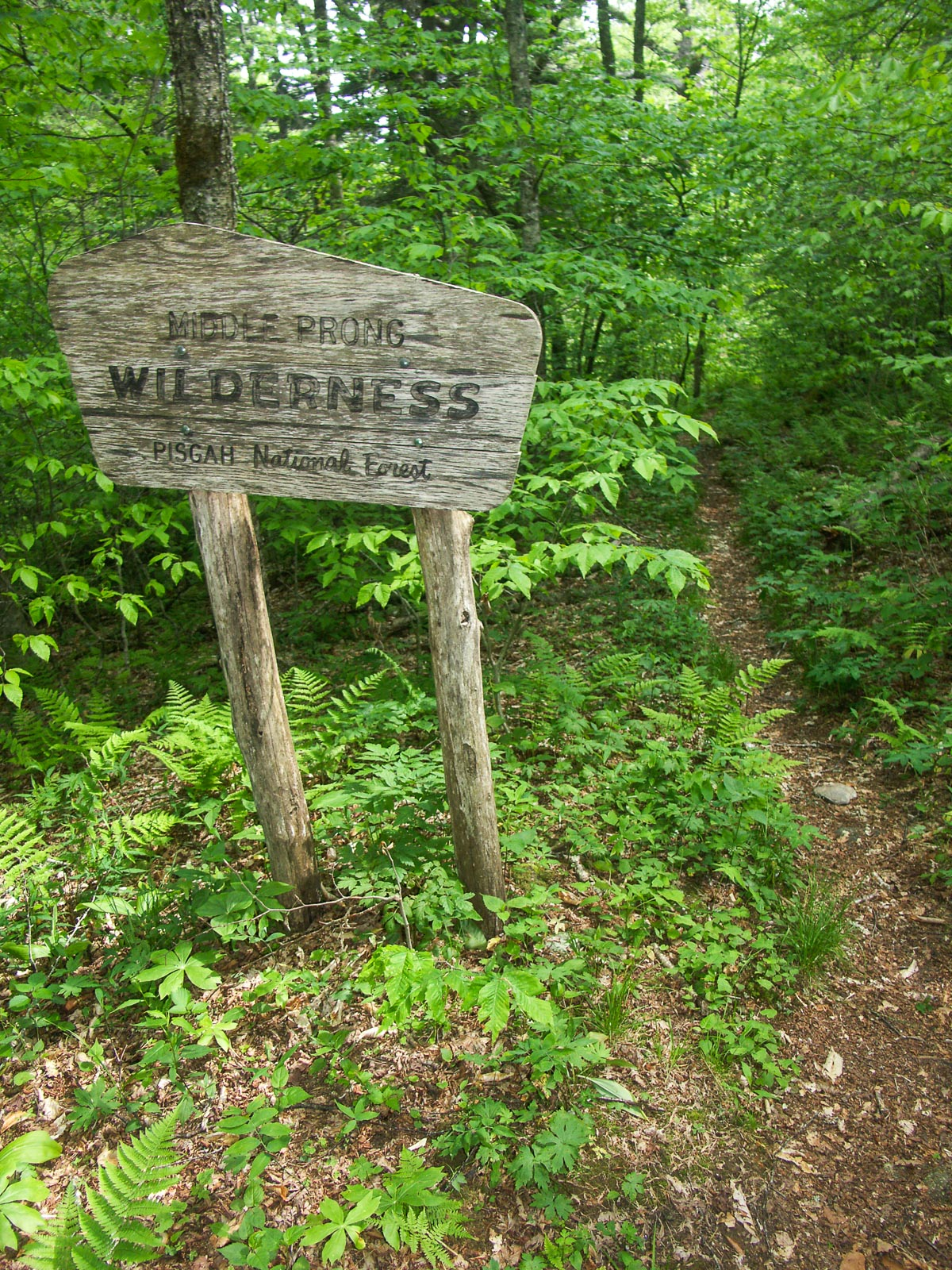 our comments on the pisgah and nantahala wilderness
