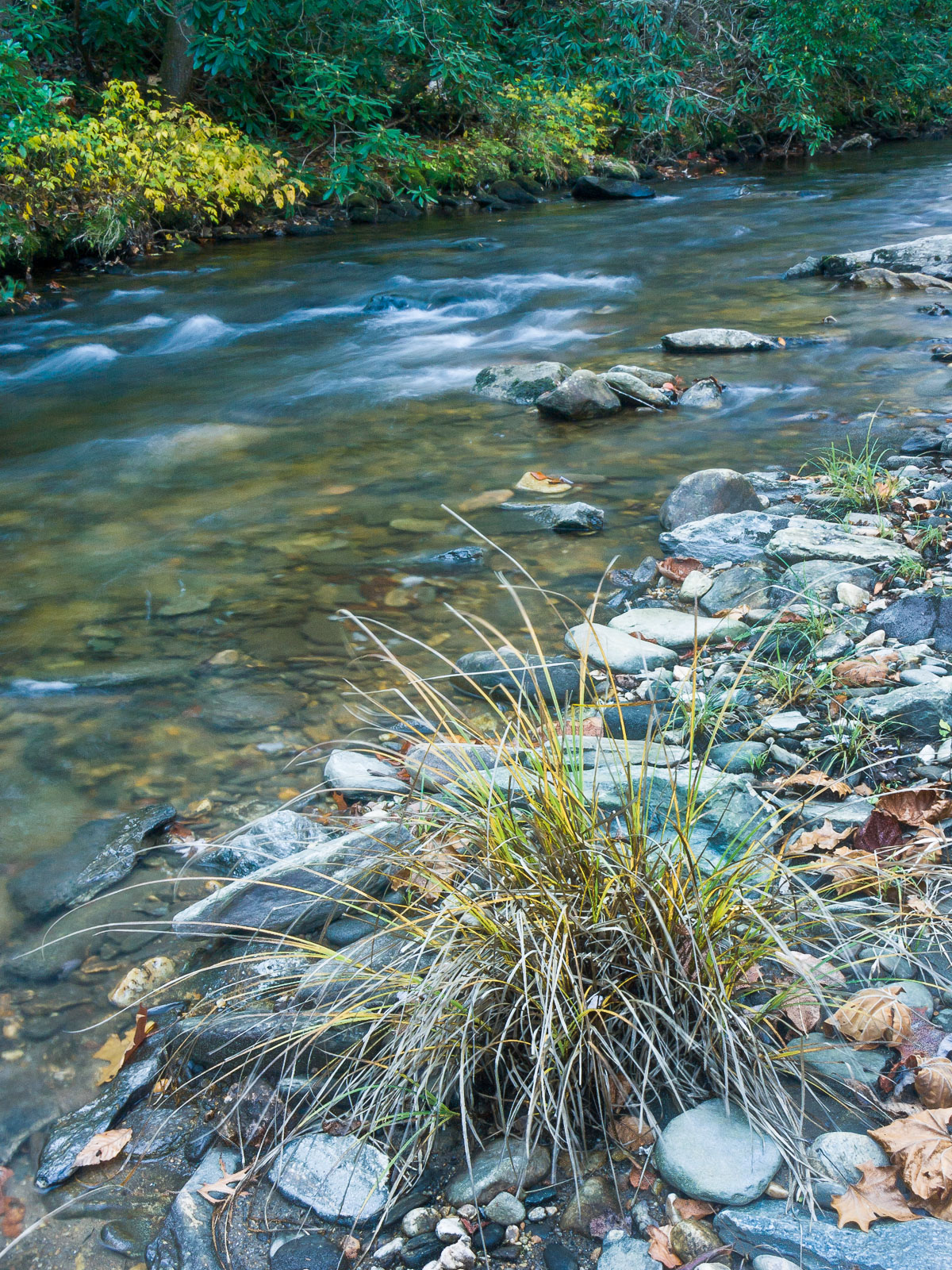 Speaking to the Soul: The Song of the Stream – Episcopal Cafe