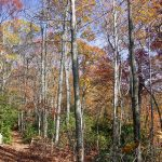 Colorful Forest on the Turkey Pen Gap Trail