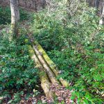 Sketchy Old Log Bridge on the Wagon Road Gap Trail