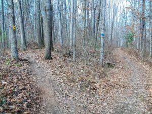 Blue Yellow Trail Split