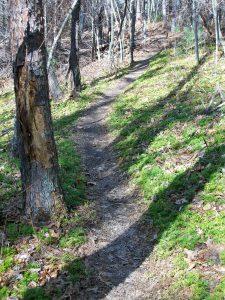 Trail throuh Clubmoss