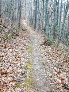 Straight Section of Trail in Richmond Hill Park