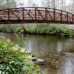 Trail Bridge Over Davidson River