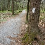 Estatoe Art Loeb Trail White Blaze