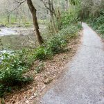 Estatoe Trail by the Davidson River
