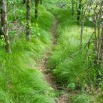 Mountains to Sea Trail through a Grassy Forest
