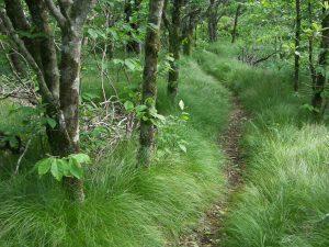 Mountains to Sea Trail through Grassy Area