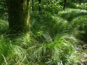 Mossy Trunk in Grass