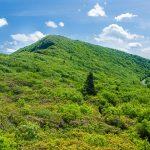 Bullhead Mountain from the Mountains to Sea Trail