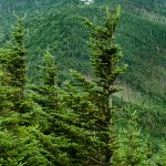 View of Mount Mitchell from Mount Craig
