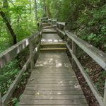 Four Seasons Trail Boardwalk