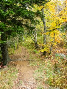 Flat Laurel Creek Trail Spruce