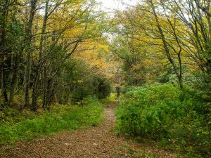 Flat Laurel Creek Trail Wide Spot