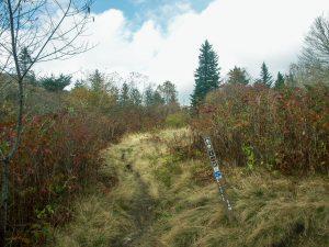 Little Sam Trail Sign