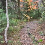 Fall Color on the Mountains to Sea Trail