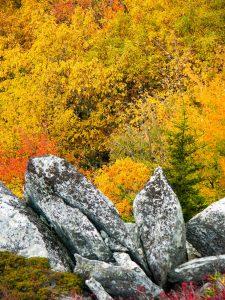 Fall Colors from Rough Ridge