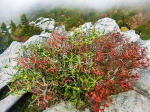 Shrubs and Rocks on Rough Ridge