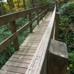 Tanawha Trail Bridge