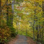 Linn Cove Viaduct Path Fall Color