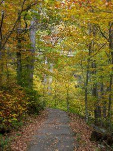 Linn Cove Viaduct Path Fall Color