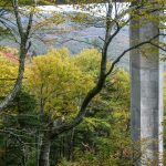 View Under the Linn Cove Viaduct