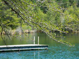 Spring Leaves at Lake Dense